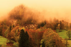 Nebeliger Wald auf Schweizer Alpen Lizenzfreies Stockbild