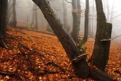 Nebeliger Wald in den riesigen Bergen Stockfotografie