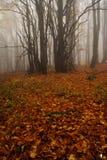 Nebeliger Wald in den riesigen Bergen Lizenzfreie Stockfotos