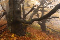 Nebeliger Wald in den riesigen Bergen Stockfotos