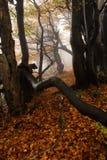 Nebeliger Wald in den riesigen Bergen Stockbild
