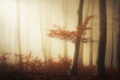 Nebeliger Wald der Märchen Stockbild