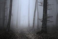 Nebeliger Wald der Märchen Stockfotos