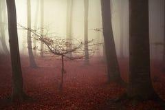 Nebeliger Wald der Märchen Stockbilder