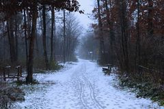 Nebeliger Wald des dunklen Herbstes unter dem Schnee! stockbilder