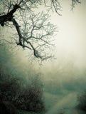 Nebeliger Wald des Herbstes Stockfotografie