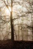 Nebeliger Wald des Herbstes Stockbild