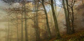 Nebeliger Wald des Herbstes Lizenzfreies Stockfoto