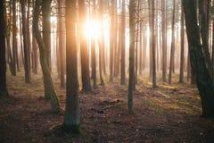Nebeliger Wald an einem sonnigen Tag Stockfotografie