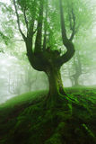 Nebeliger Wald im Frühjahr Stockfoto