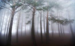 Nebeliger Wald im Herbst Stockfotografie
