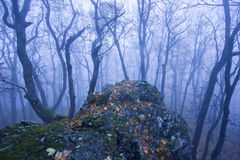 Nebeliger Wald im Herbst Lizenzfreies Stockfoto
