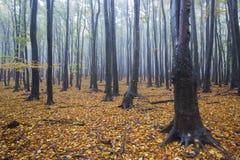 Nebeliger Wald im Herbst Lizenzfreie Stockfotos