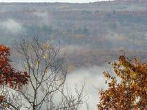 Nebeliger Wald im Herbst Stockfotos