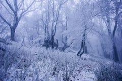 Nebeliger Wald im Winter lizenzfreies stockbild