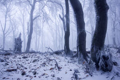 Nebeliger Wald im Winter Stockfotografie