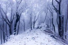 Nebeliger Wald im Winter lizenzfreies stockfoto