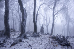 Nebeliger Wald im Winter lizenzfreie stockbilder