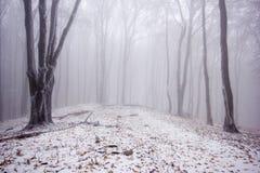 Nebeliger Wald im Winter stockbilder