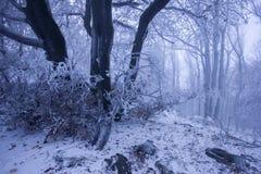 Nebeliger Wald im Winter lizenzfreie stockfotos