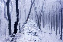 Nebeliger Wald im Winter Stockfotos
