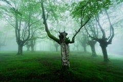 Nebeliger Wald mit Nebel Lizenzfreies Stockbild