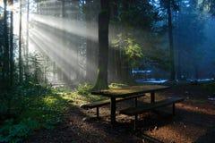 Nebeliger Wald mit Sonnelichtstrahl, Lynn-Tal-Park lizenzfreie stockfotografie