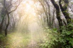 Nebeliger Wald mit Sonnenstrahlen Stockbilder