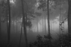 Nebeliger Wald morgens Stockbilder