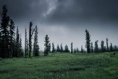 Nebeliger Wald morgens stockfoto
