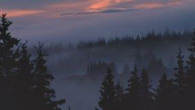 Nebeliger Wald nach Einbruch der Dunkelheit stock video