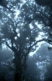Nebeliger Wald an Nationalpark Doi Inthanon Stockfotos