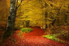 Nebeliger Wald während des Herbstes Stockfoto