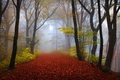 Nebeliger Wald während des Herbstes Lizenzfreie Stockfotos