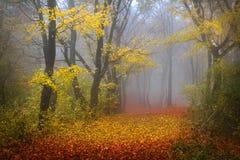 Nebeliger Wald während des Herbstes Lizenzfreie Stockbilder