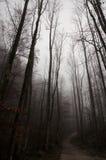 Nebeliger Waldweg im Winter Stockfotografie