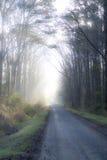 Nebeliger Weg auf treelined Weg stockfotografie