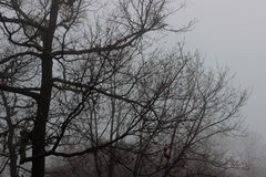 Nebeliger Winter Stockfotos