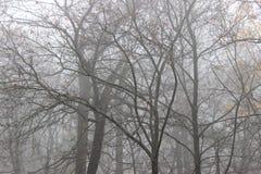 Nebeliger Winter Stockbilder
