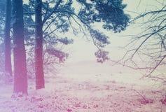 Nebeliger Wintermorgen am Rand des Waldes Stockbild
