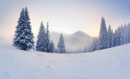 Nebeliger Wintersonnenaufgang Stockfoto