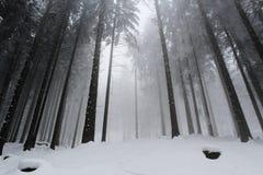 Nebeliger Wintertag im Wald Lizenzfreies Stockfoto