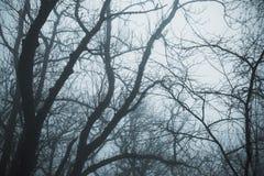 Nebeliger Winterwald mit bloßen Baumniederlassungen Stockfotos