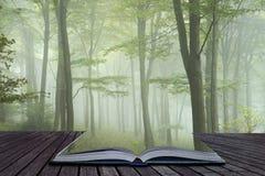 Nebeliges Bild des üppigen grünen Märchenwachstumskonzeptes Waldlandschafts lizenzfreie stockfotos