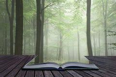 Nebeliges Bild des üppigen grünen Märchenwachstumskonzeptes Waldlandschafts Lizenzfreies Stockfoto