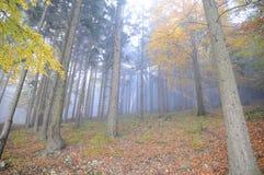 Nebeliges Holz lizenzfreie stockfotos