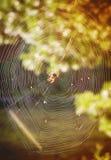nebeliges Morgen- und Spinnennetz Stockbild