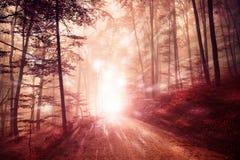 Nebeliges Waldlicht mit Leuchtkäfereffekten Stockfotografie