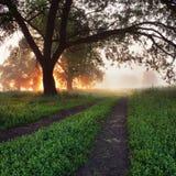 Nebelmorgen Lizenzfreies Stockfoto