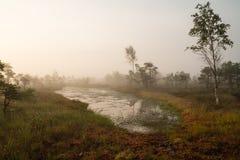 Nebelmorgen auf dem Sumpf Lizenzfreies Stockbild